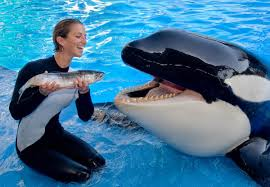 how to become a marine mammal trainer